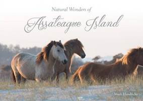 https://www.nationalparkstraveler.org/sites/default/files/styles/large/public/natural%20wonders%20of%20assateague%20island.jpg?itok=Cr4ReCfl